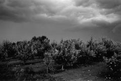 Apfelplantage Ungarn