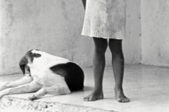 Acandi Cordoba 1983
